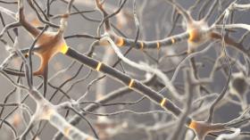 Unité Médicale Fonctionnelle de Neuromusculaire Erasme